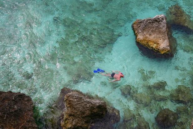 Caraïbische koraalriffen afgelopen 40 jaar sterk achteruitgegaan