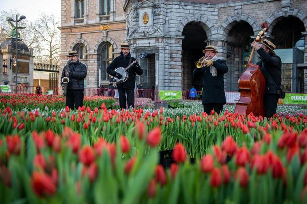 Tulpen plukken in hartje Antwerpen