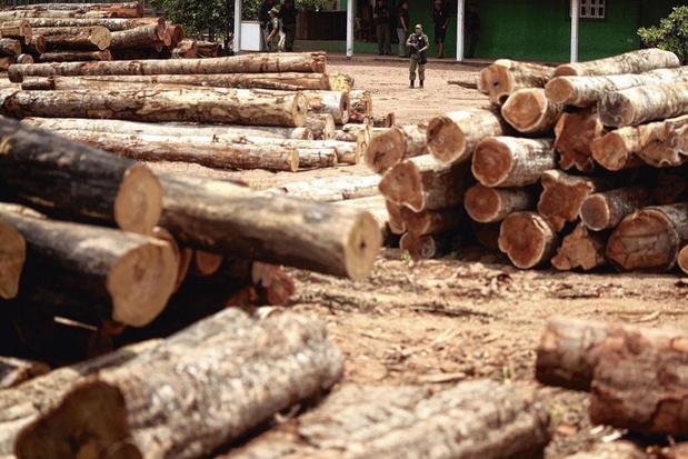 """Kocht Kortrijks bedrijf illegaal Amazonehout? """"Het gaat hier niet zomaar om wat boomschors"""""""
