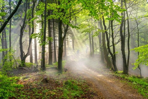 Découvrez la Thuringe, le poumon vert de l'Allemagne