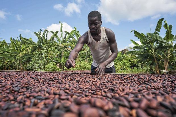"""Comment Barry Callebaut veut """"durabiliser"""" la filière du cacao"""