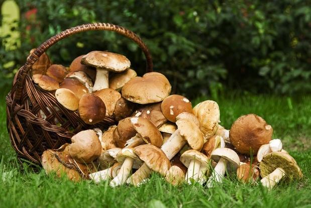 Conseils pour une cueillette de champignons réussie