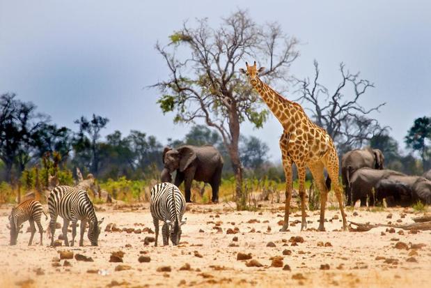 Afrika op zijn puurst