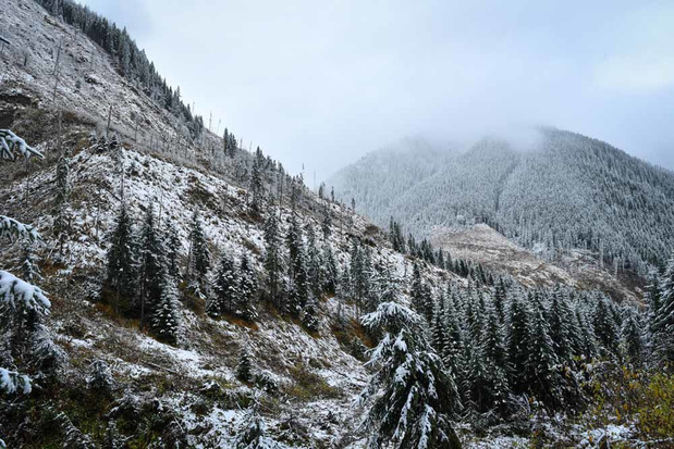 Les gardiens des forêts roumaines