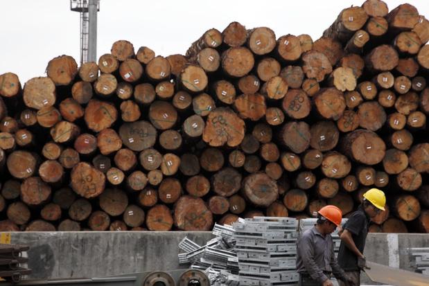 Antwerpen draaischijf van illegale houthandel