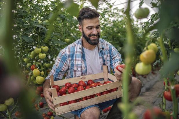 Meer tomaat prima voor je zaad?