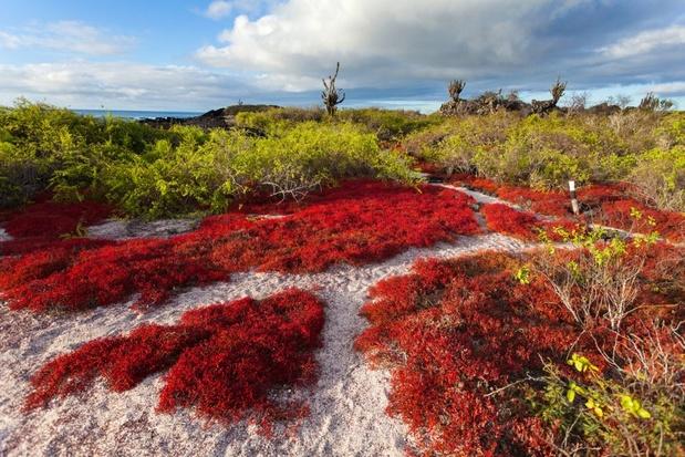 Tien keer meer invasieve soorten op Galápagoseilanden dan gedacht