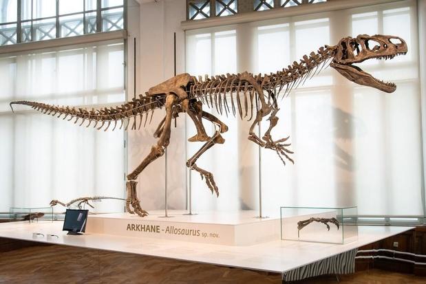 Dino 'Arkhane': wereldprimeur voor Museum Natuurwetenschappen