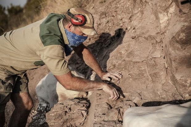 Australotitan cooperensis, l'un des plus grands animaux à avoir foulé la surface du globe