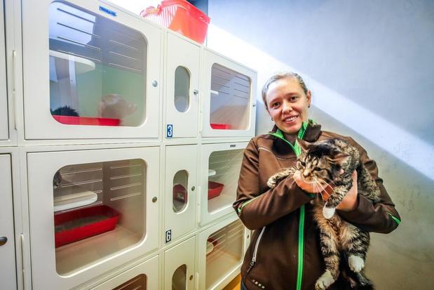 55 katten weggehaald bij vrouw in Diksmuide