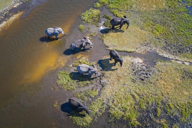 Botswana staat jacht op olifanten opnieuw toe