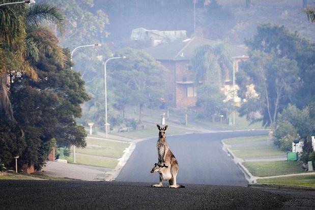 Bosbranden in Australië