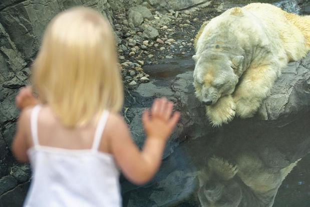 Les zoos, c'est dépassé