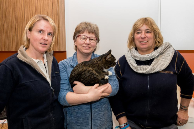 Kat belandt vanuit Nederland in containerpark van Hooglede