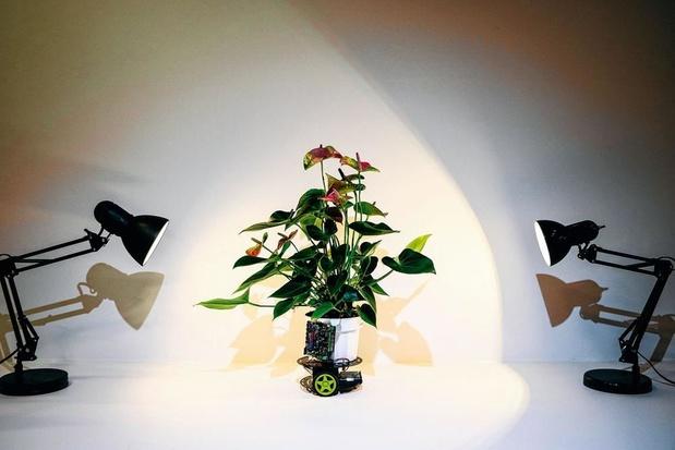 Elowan, plante d'intérieur cyborg