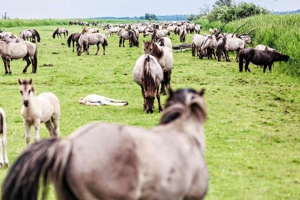 La Finlande mise sur les déjections animales pour produire de l'énergie verte