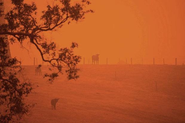Feux de forêt en Australie : un médecin belge témoigne