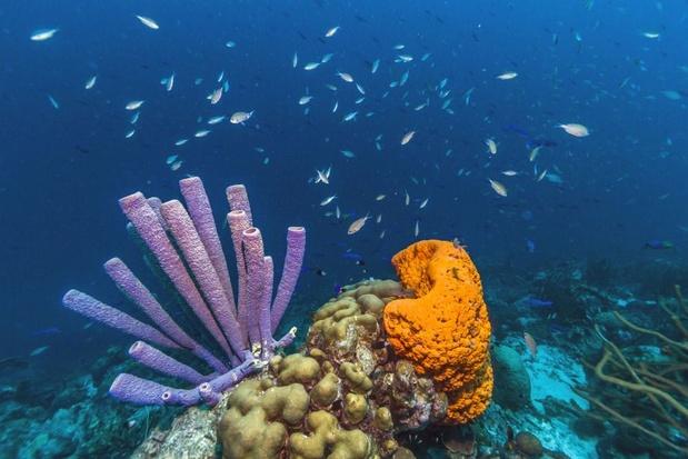 'Het is meer dan ooit tijd om actie te ondernemen tegen het verdwijnen van koraalriffen'