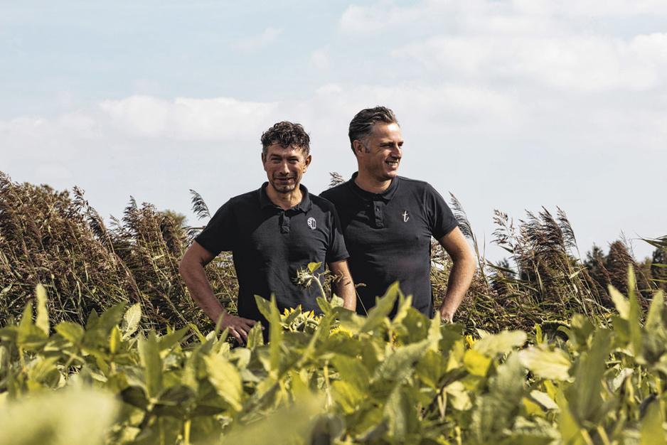 Van bonen kweken tot bottelen: zo maak je artisanale sojasaus