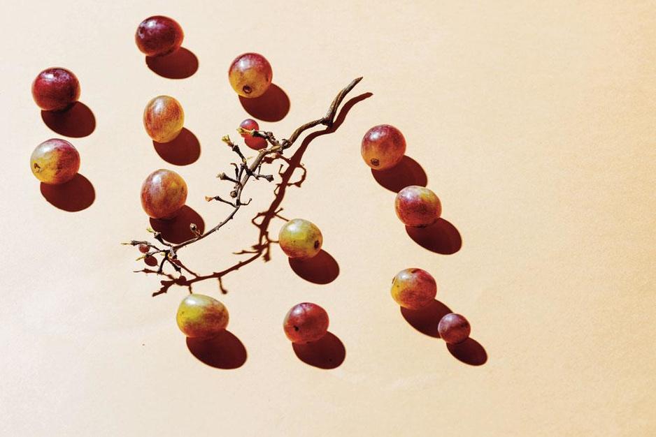 Deze verleidelijke druivenrassen raakten (onterecht) in de vergetelheid