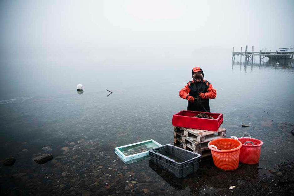 Une plongeuse dans les eaux glacées en Suède