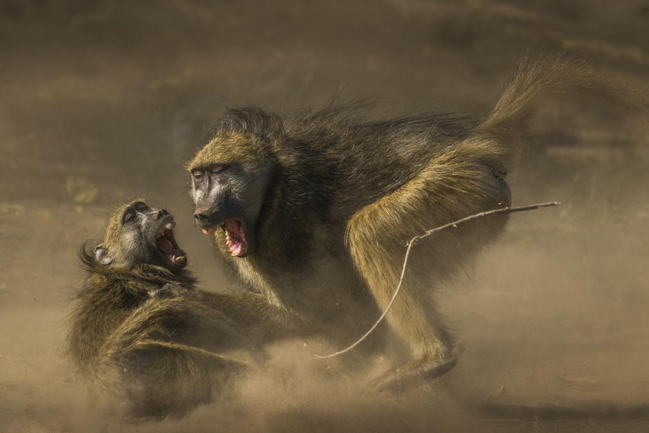 Deze schitterende foto's winnen de Nature Conservancy fotowedstrijd