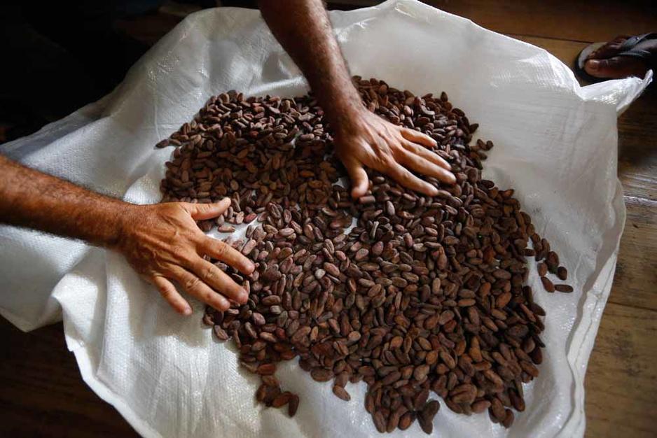 Le Brésil se tourne vers le cacao fin