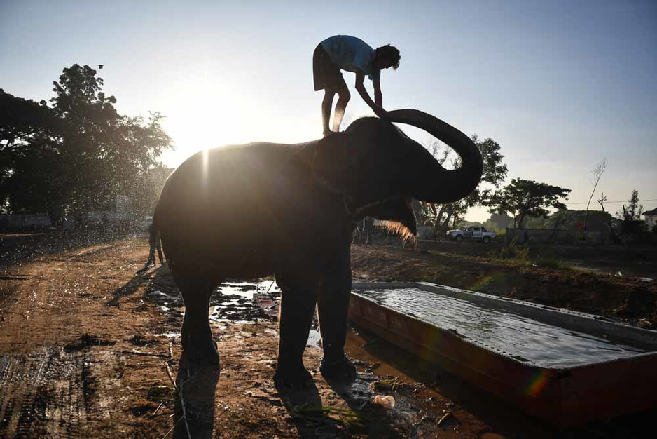 """""""Eléphants à touristes"""": le sombre envers du décor"""