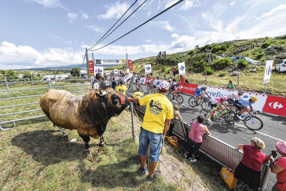 De Tour in België: 'De favorieten vrezen de Vlaamse rotondes'
