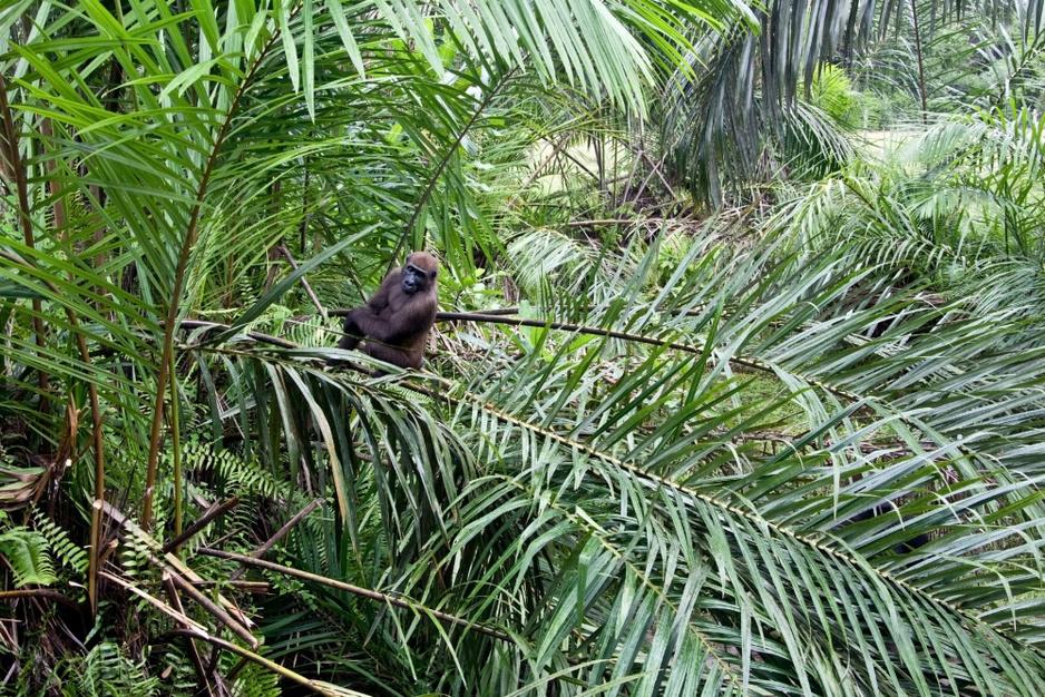 Dit zijn de mooiste regenwouden in de wereld