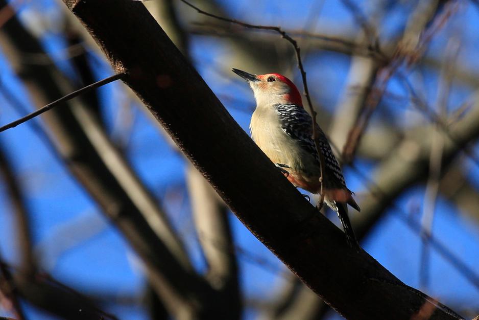 L'observation des oiseaux à Central Park, rare loisir en temps de Covid (en images)