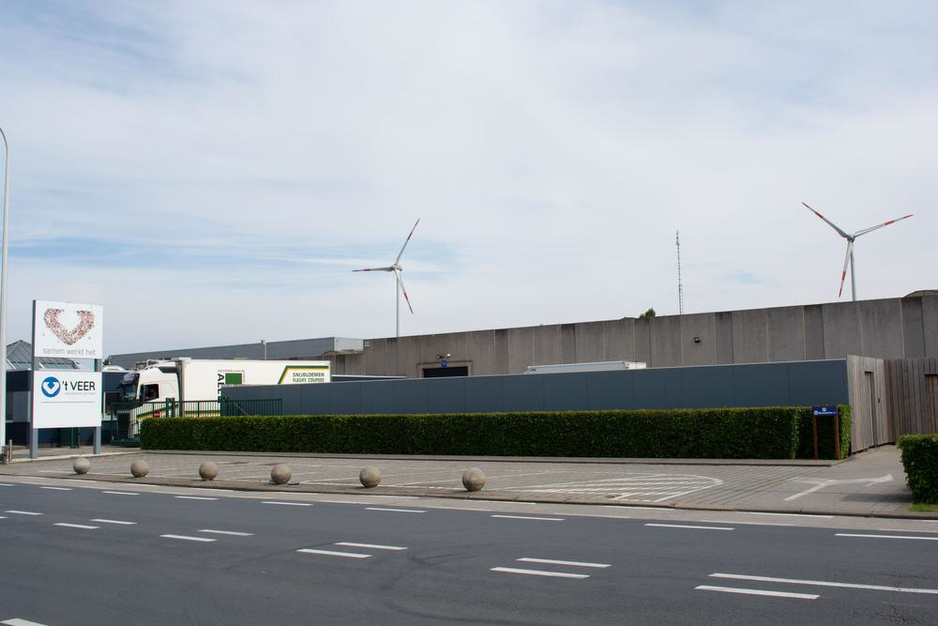 """Alerte Koekuit niet blij met aanpak komst windmolen: """"Het kalf was al langer verdronken"""""""