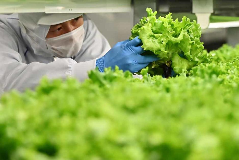 """Des """"usines à légumes"""" pour remplacer la campagne (en images)"""