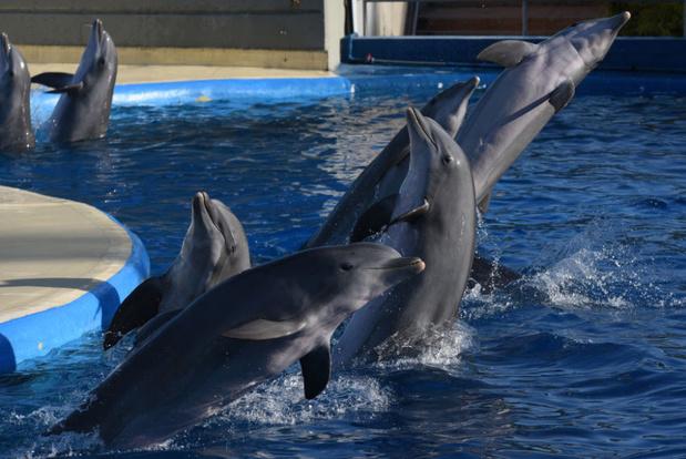 TripAdvisor stopt verkoop tickets voor attracties waar dolfijnen en walvissen worden gefokt