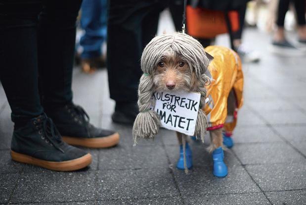 Hond met grote boodschap