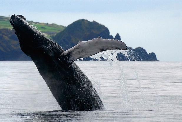 Un guide canadien condamné pour s'être approché trop près d'une baleine