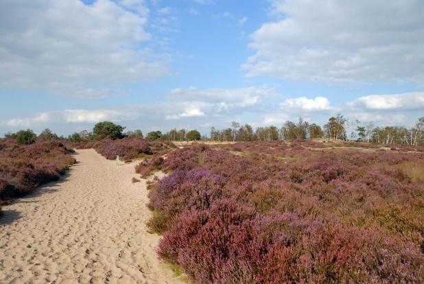 Na 'Fietsen door het water en door de bomen' lanceert Limburg: 'Fietsen door de heide'