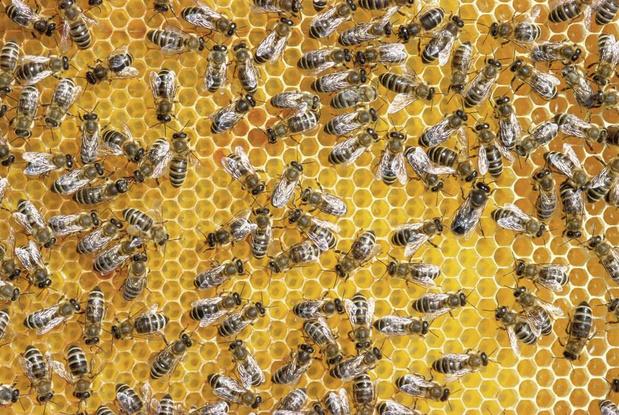 Et si... les abeilles disparaissaient ?