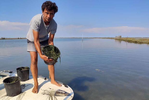 Venise veut reconquérir sa lagune (en images)