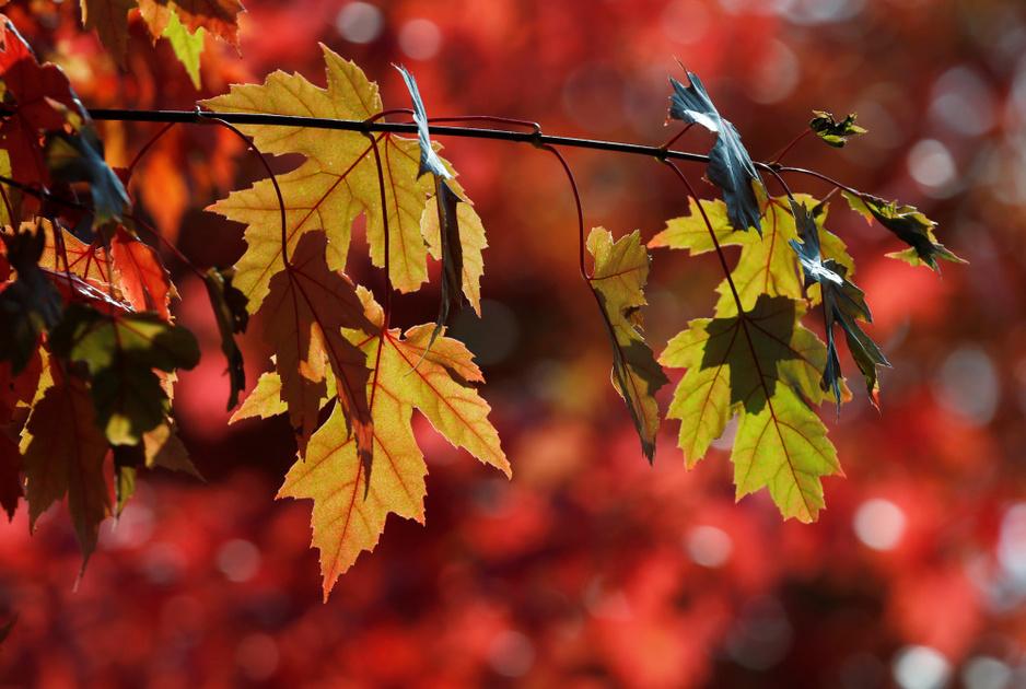 In beeld: Genieten van de herfst