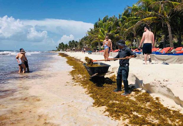 Les sargasses, la plaie qui menace les plages idylliques du Mexique (en images)