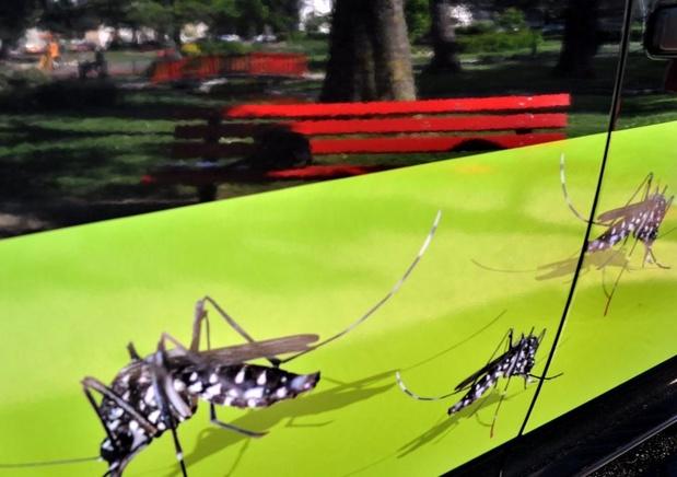 Le moustique tigre gagne Paris et plus de la moitié du territoire français