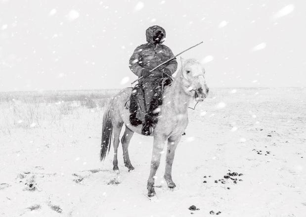 Ode aan paard en ruiter