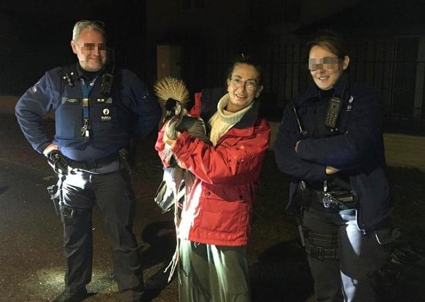 VIDEO - Deerlijkse politie betrokken bij een 'wilde' achtervolging met...een kraanvogel!