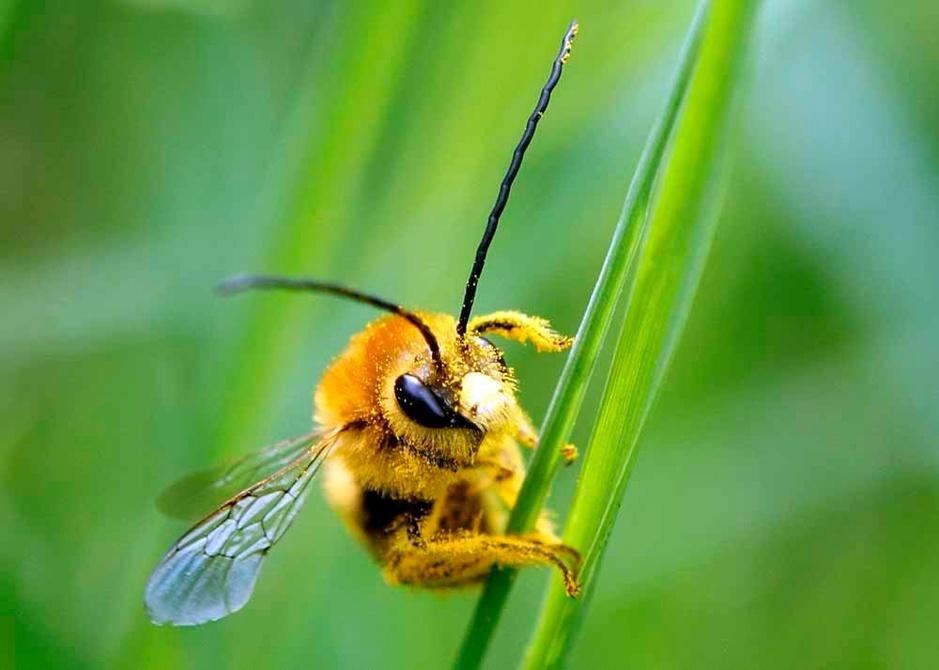 Biodiversité: 14 espèces vulnérables qui jouent un rôle-clé (en images)