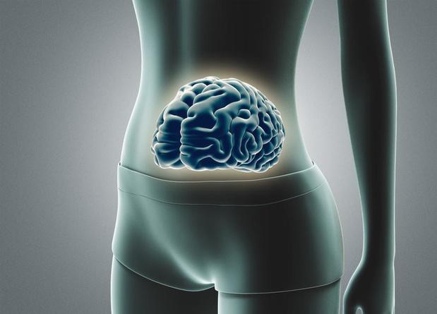 Les intestins: les mystères du deuxième cerveau