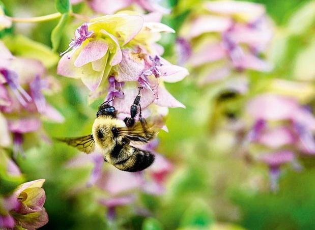 Mon geste pour les abeilles