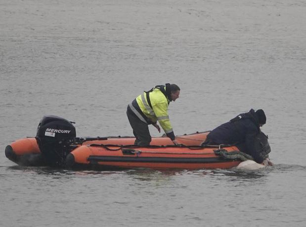 Brandweer en behulpzame vissers redden schaap uit havengeul