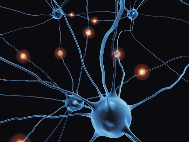 La réparation neurale en point de mire