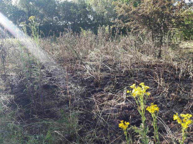Grasbrandje in Waregemse industriezone Vijverdam snel geblust